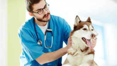Photo of Best Veterinary Schools in the World 2021
